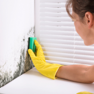 moldy walls cleaning
